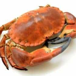 Fresh Coohed Cornish whole crab
