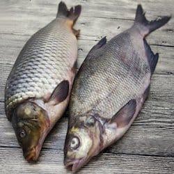 Fresh whole carp