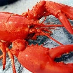 Frozen Cooked Lobster