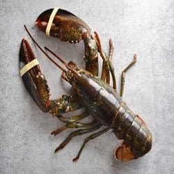 1 Lobster Whole Live
